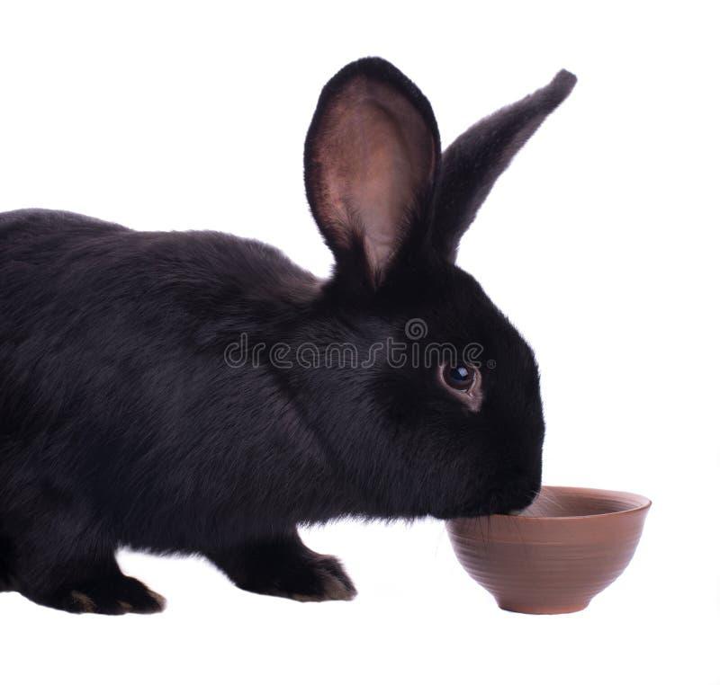 Free Small Racy Dwarf Black Bunny Stock Photography - 36370182