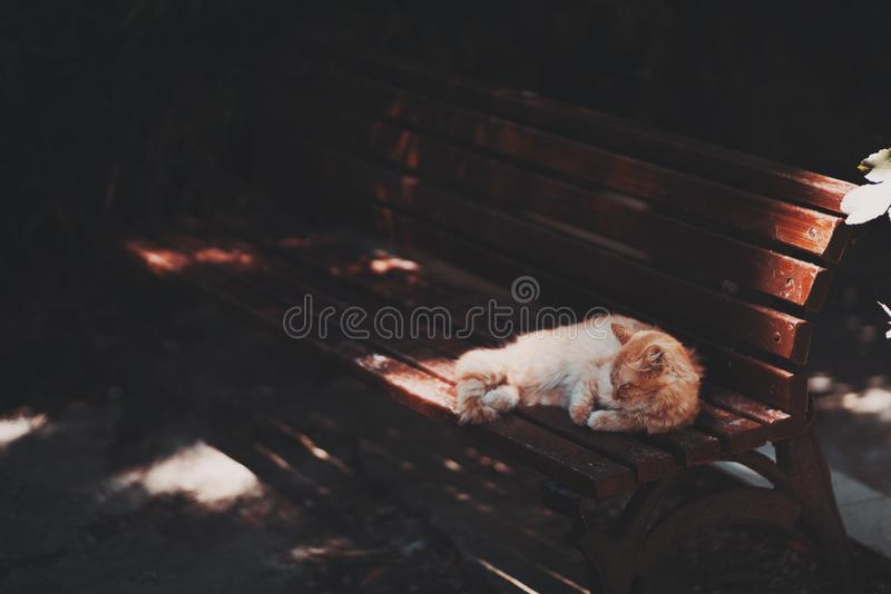 Small red cat on bench in public park royalty free stock photos