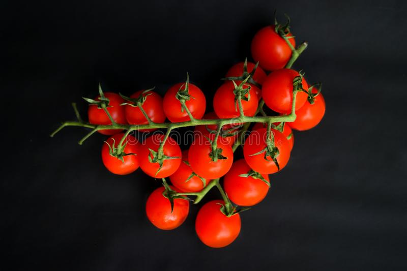 Small red cherry tomatoes. Selective focus, small red cherry tomatoes on green branch on dark black background royalty free stock photography