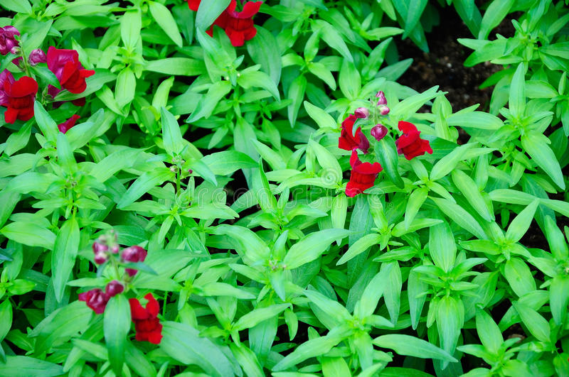 Small red flowers and green leaves stock photography