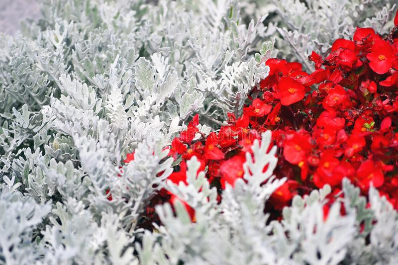 Small red flowers among the white branches of plants stock photo