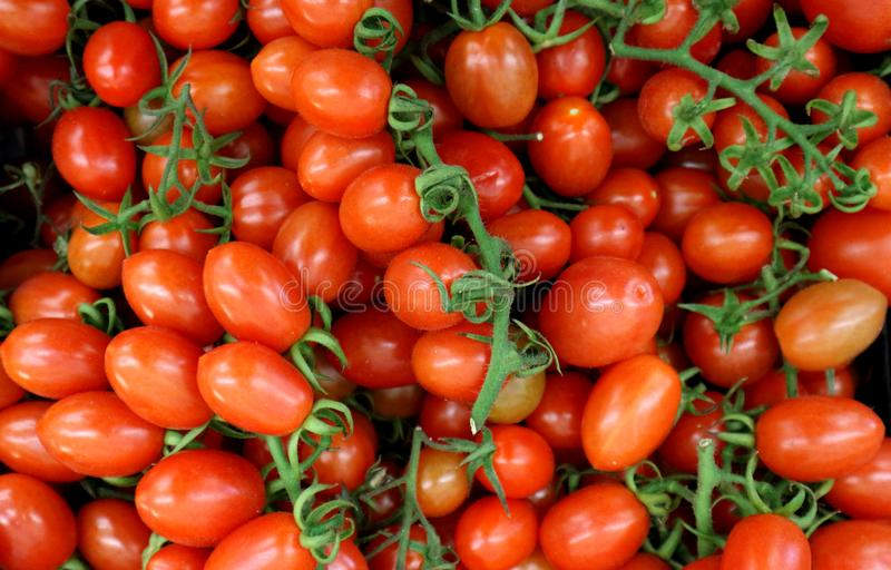 Small red italian tomatoes called Datterini, with branches and little leaves. Top view, food background.  stock image