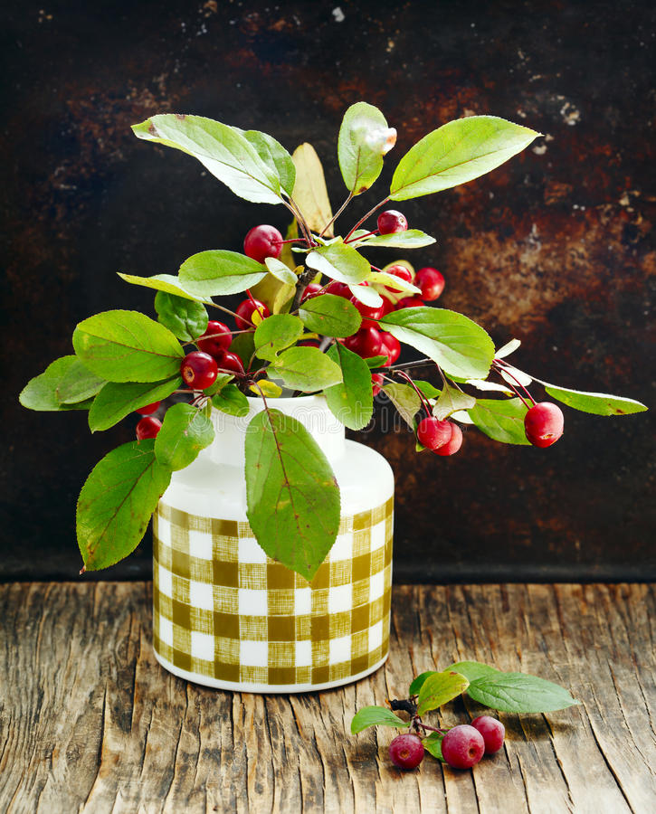Small red ripe apples Ranetki on green branch stock images