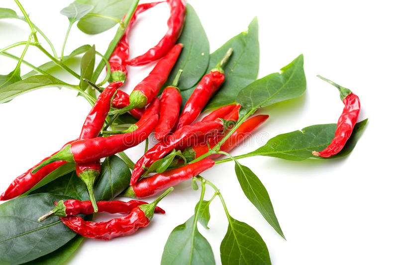Download Small Red Spicy Hot Chili Peppers On Plant Leaves Stock Image - Image: 12816069