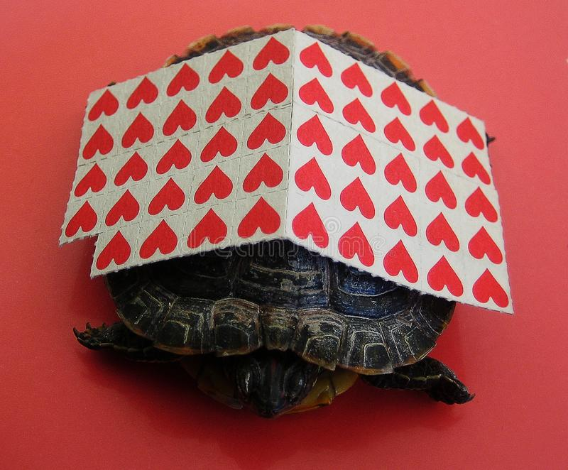 Small red stick papers with a turtle background macro wallpaper fine prints royalty free stock photography