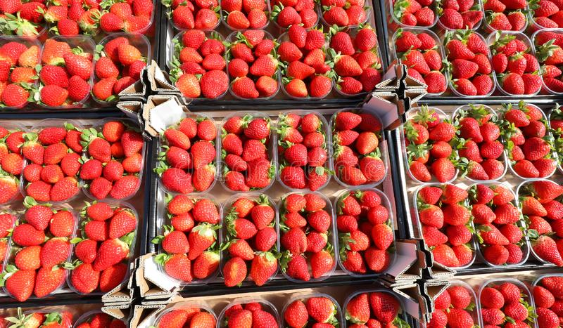 Small red strawberries trays for sale at the fruit and vegetable. Many small red strawberries trays for sale at the fruit and vegetable market royalty free stock image
