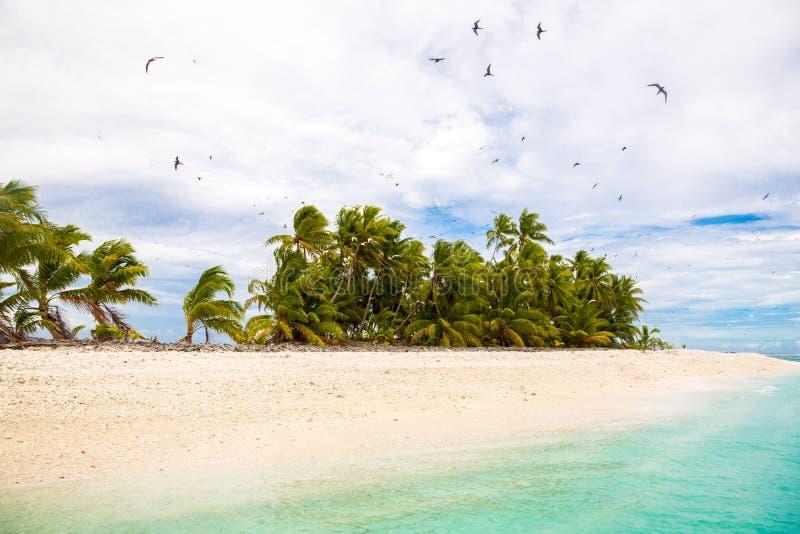 Small remote tropical island motu overgrown with palms. Sandy beach, big flock of birds flying. Funafuti atoll, Tuvalu, Oceania. Small remote tropical island stock photos