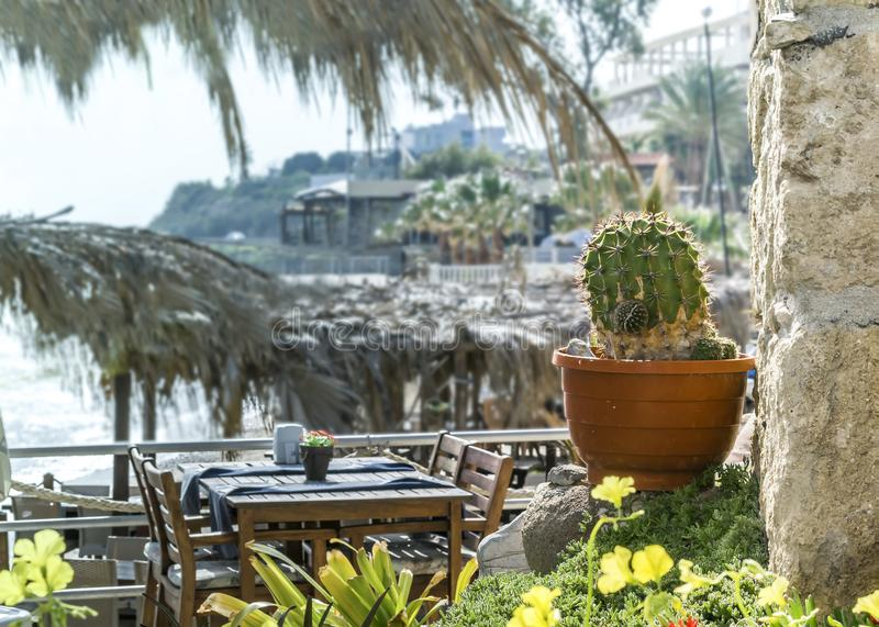 Small restaurant on the Mediterranean coast. Traditional Mediterranean style. Old cactus in a pot next to wall.  stock photos