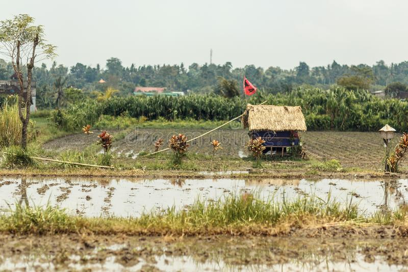 A small rice field in an Asian village. In the middle of the field is a small house with a straw roof.  stock image