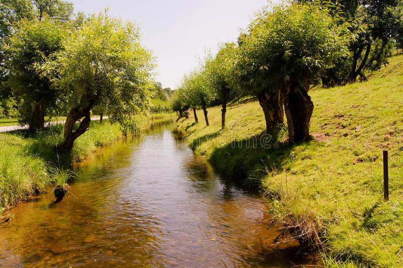 Small river. With willows on the bank royalty free stock photos