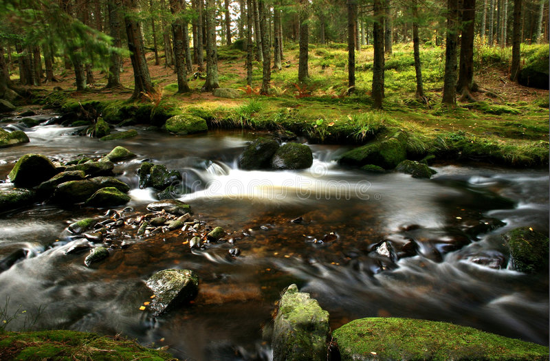 Download Small river stock photo. Image of fresh, passion, beauty - 4391498