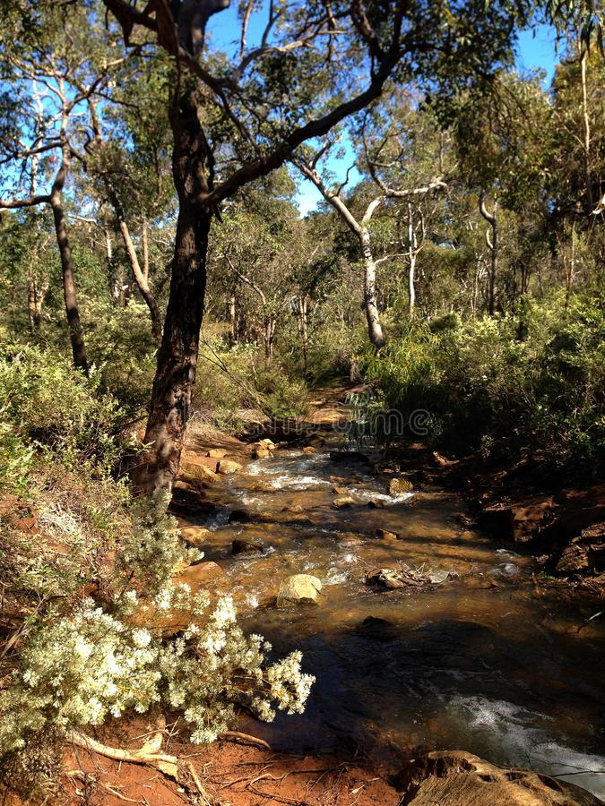 Small river creek flowing through forest in Lesmurdie Falls National Park, Western Australia royalty free stock images