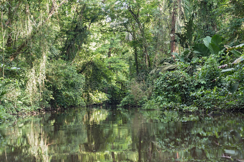 Small river with densely wooded shore in Tortuguero National Park, Costa Rica.  royalty free stock photo