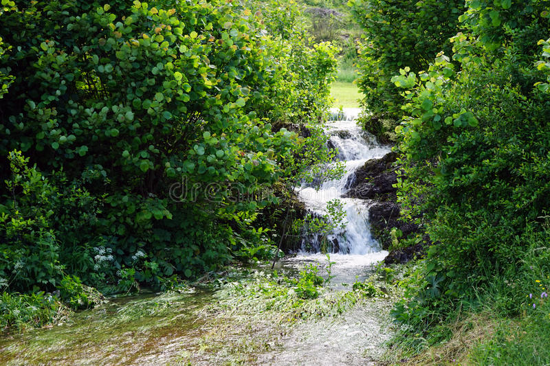 Small river. With flooding in the forest, Slovenia royalty free stock photos