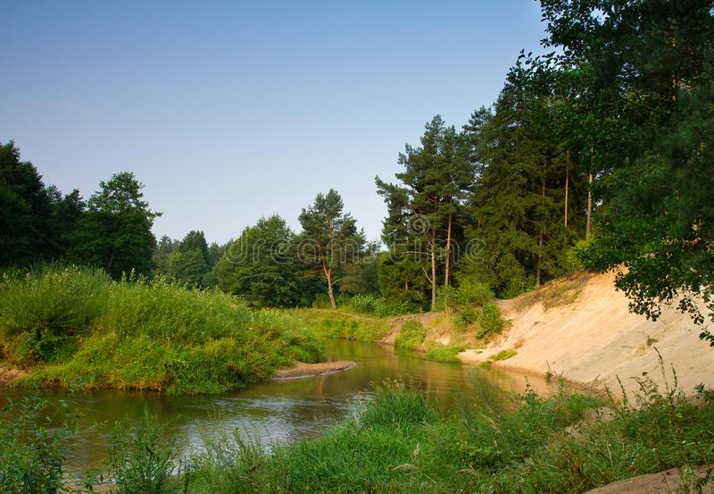 Small river in forest royalty free stock images