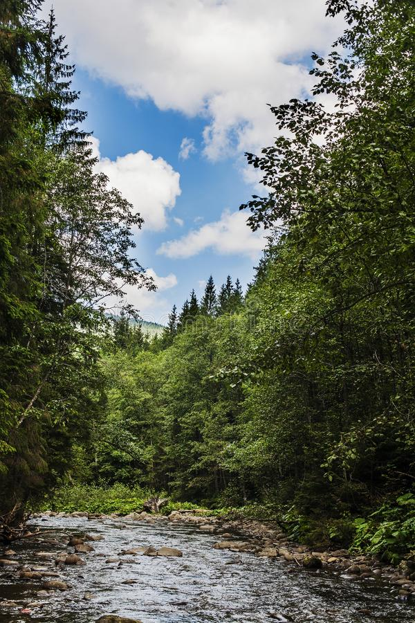 Small river in the forest on  summer day. Clouds in the sky. Small river in the forest on a summer day. Clouds in the sky stock images