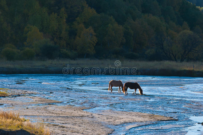 A small river on the grassland, a leisurely grass. stock image