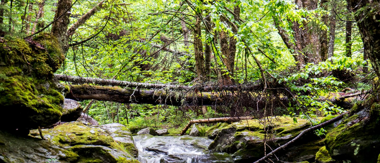 Small river with a tree trunk over it. A peaceful panoramic photo of a small river with a tree trunk over it in the middle of a big Canadian forest stock photos