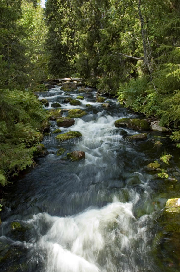 Free Small River Waterfall Running Through Thick Forest Stock Photos - 10720543