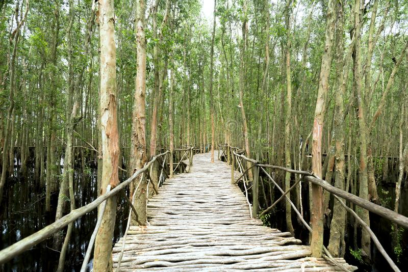 Small road bending through the Melaleuca forests in the ecotourism. It is considered to be the green lung of the Mekong Delta royalty free stock image