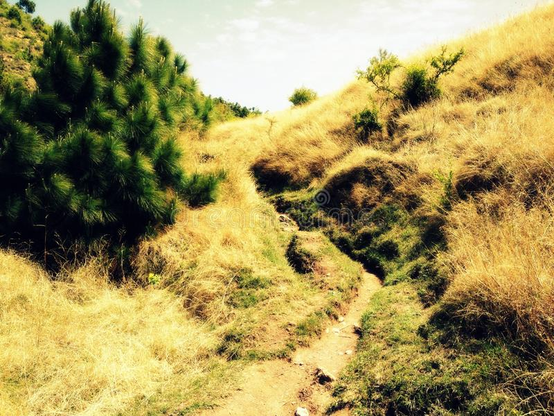 Small road between Brown grass. Any of various plants having slender leaves similar to those of a grass. An expanse of ground, such as a lawn, covered with grass royalty free stock photography