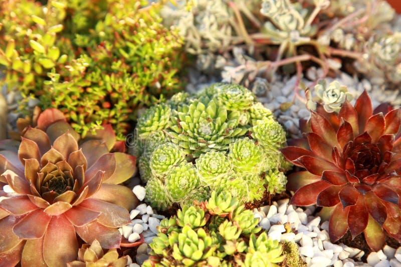 Small rock garden stock photography