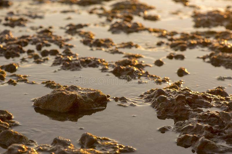 Small rocks in the sea at sunset royalty free stock photography