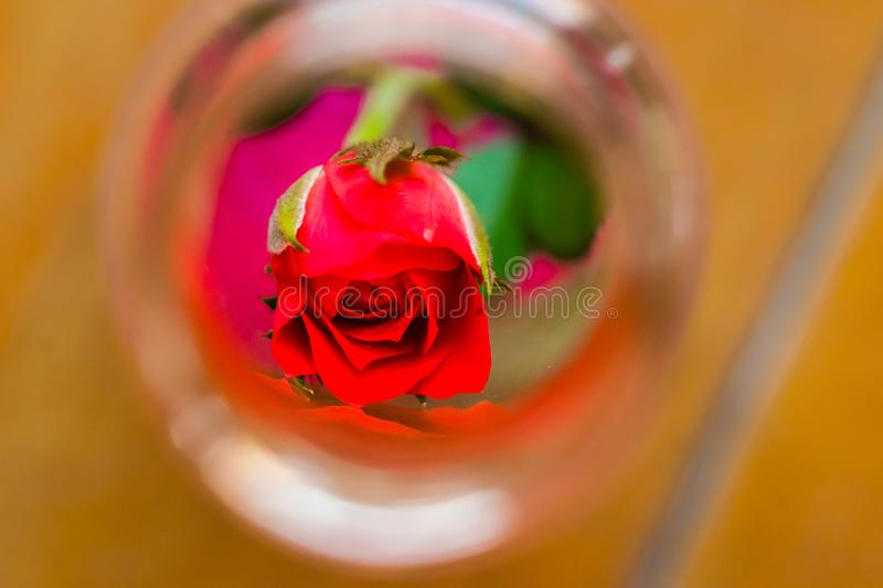 A small rose in a glass bottle stock photos