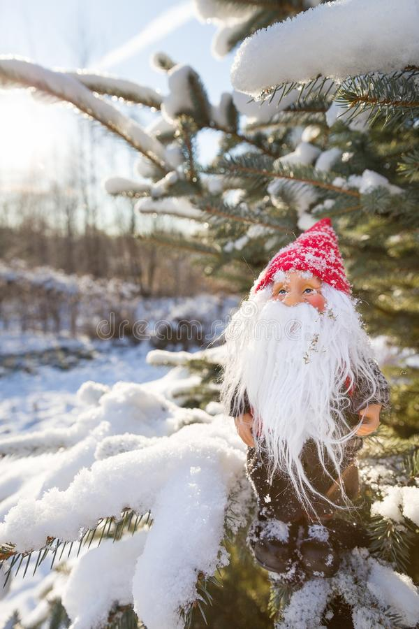 Small Santa Claus on the Christmas tree with snow. Father Christmas to your doors on a sunny day. Holiday season and Christmas concept stock images