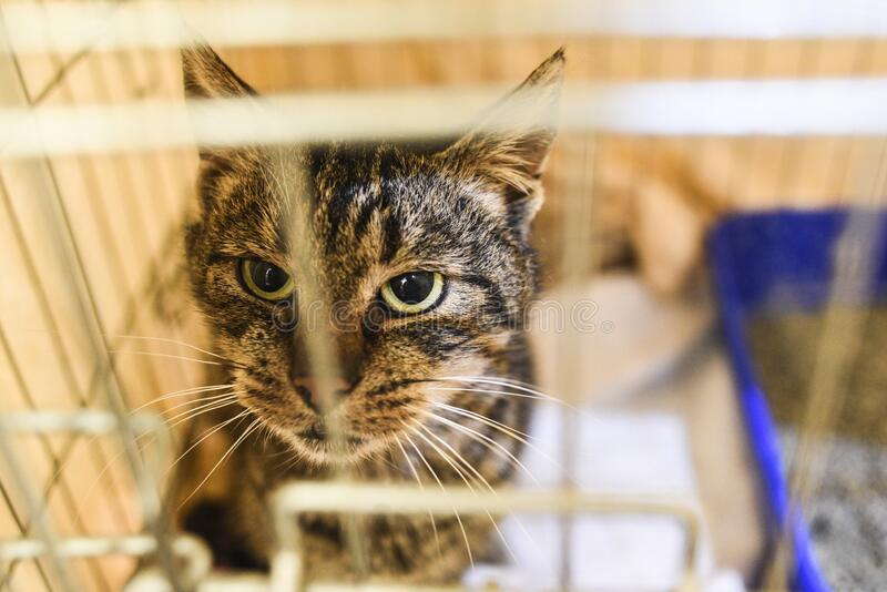 Small scared cats in a cage in a shelter waiting for a home royalty free stock photo