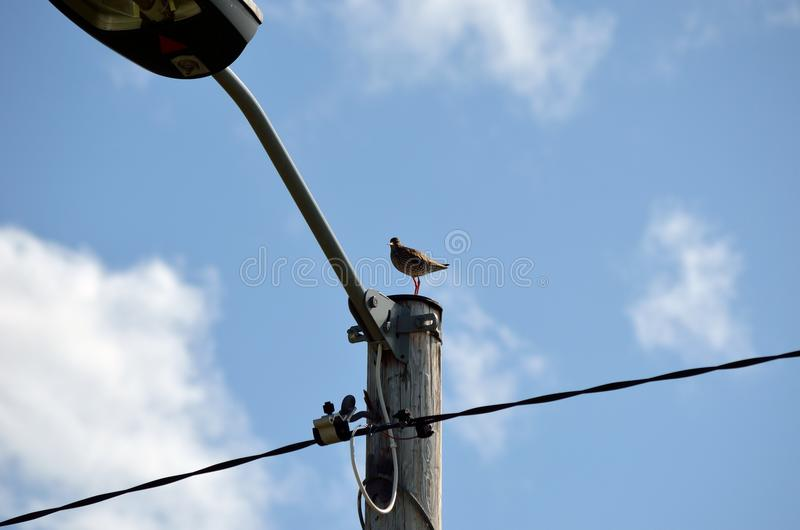Small sea bird standing on pole with blue summer sky royalty free stock images