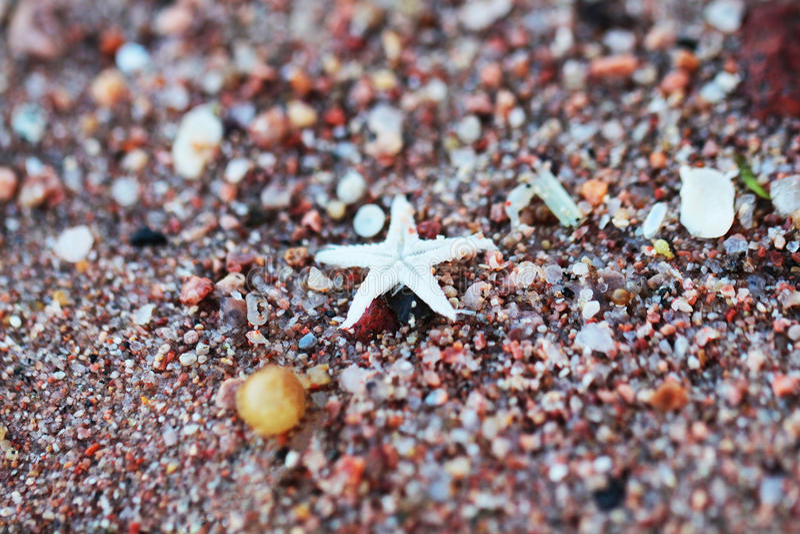 Small sea star on sand stock image