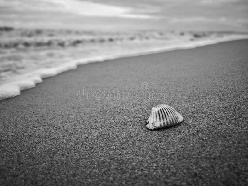 Small seashell on the sand on the beach in the back light of sunset, background, close up. stock photo