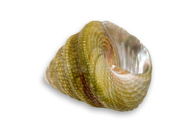 Small Seashell VI stock image