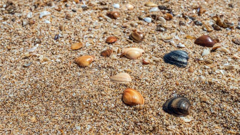 Small seashells on ocean coast background royalty free stock photo