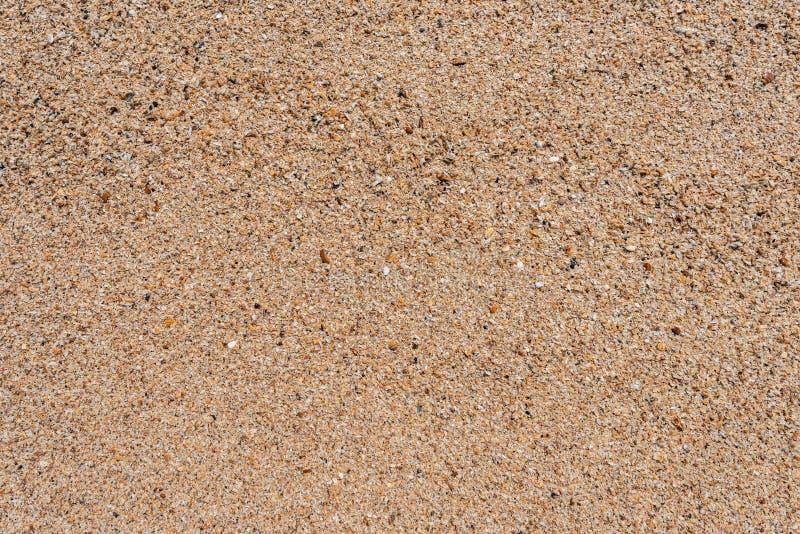Small seashells texture background royalty free stock photos