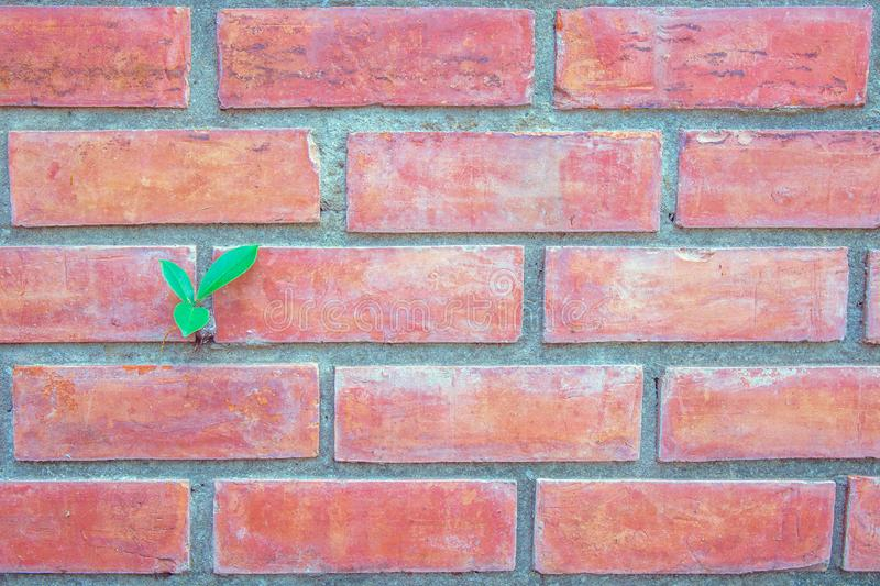 Small seed green plant on the red brick wall. royalty free stock photo