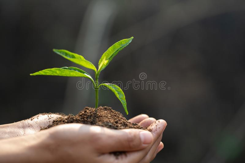 Small seedlings that grow in human hands, plant trees to reduce global warming, Forest conservation, World Environment Day.  royalty free stock photo
