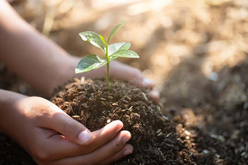Small seedlings that grow in human hands, plant trees to reduce global warming, Forest conservation, World Environment Day.  stock photography