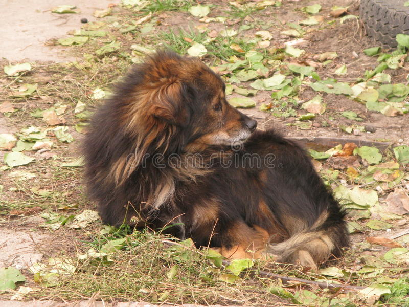 A small shaggy dog. Resting on autumn ground stock image