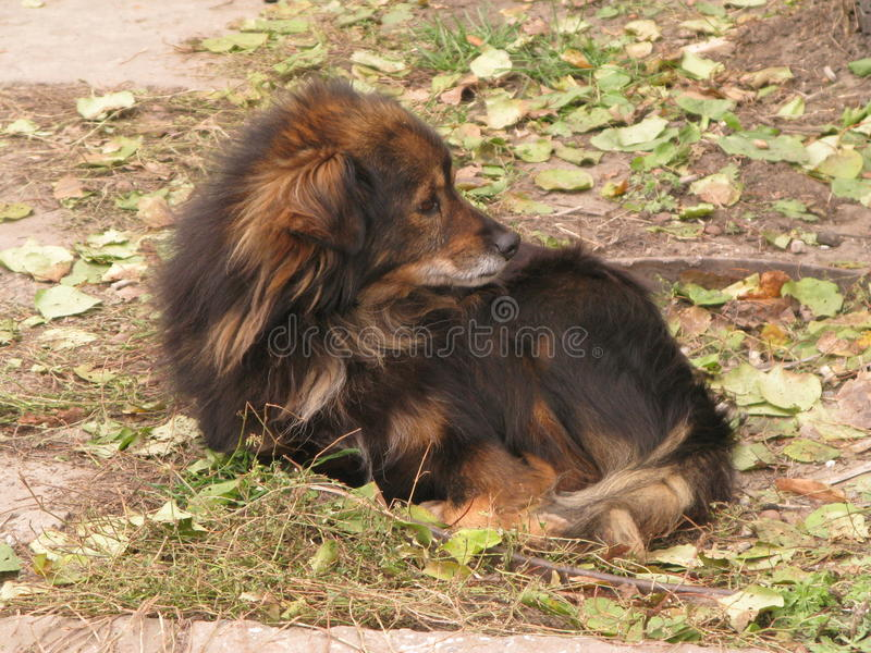 A small shaggy dog. Resting on autumn ground royalty free stock photo