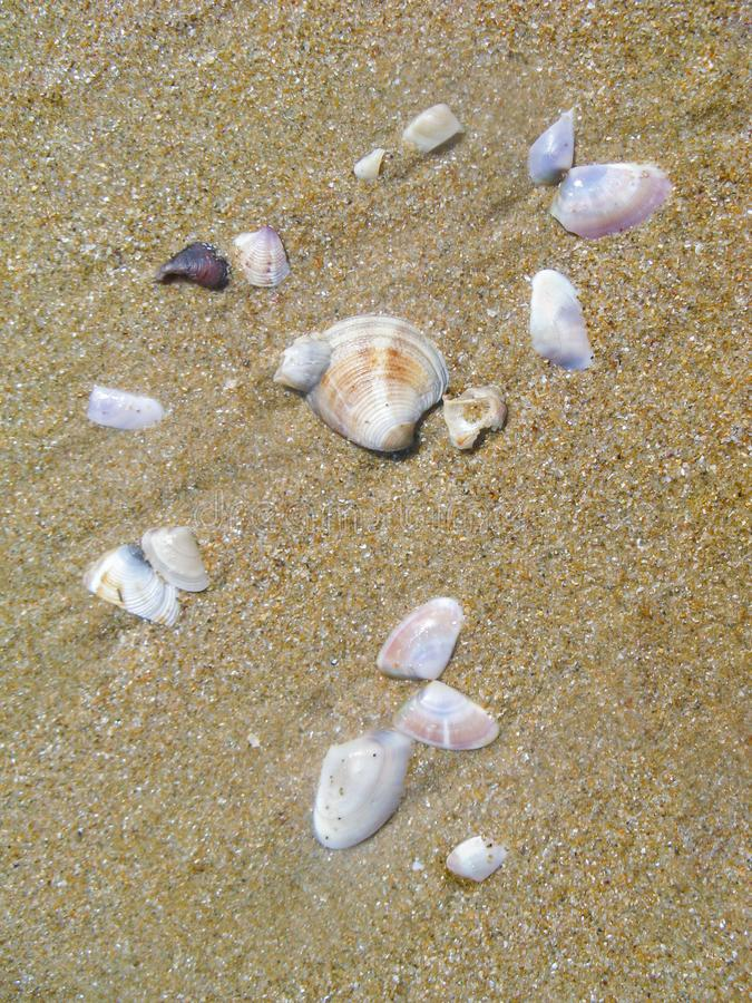 Small shells of mollusks thrown from the sea water on the beach sand. Shells shimmer with mother of pearl on bright sun royalty free stock photos