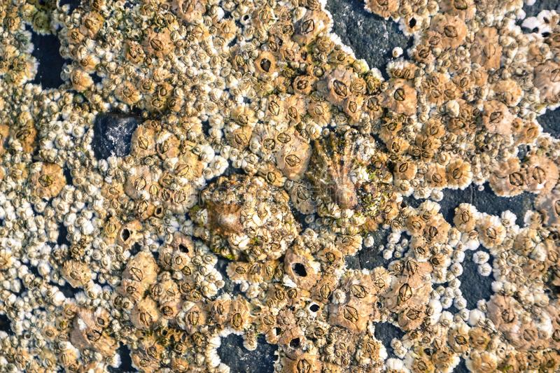 Small shells and pieces of shells and coral make up the beach. Texture royalty free stock photo