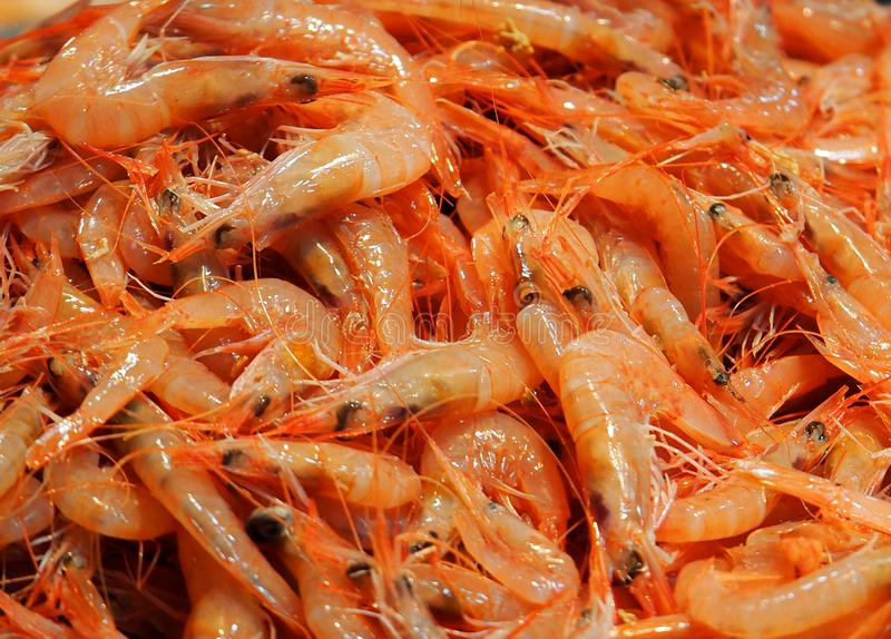 Small Shrimp In Market In Faro Portugal royalty free stock photography