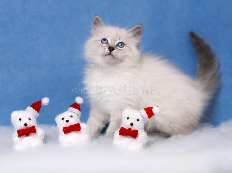 Small siberian kitten and xmas decor. Small siberian kittens and Christmas snowmans on blue velvet background stock image