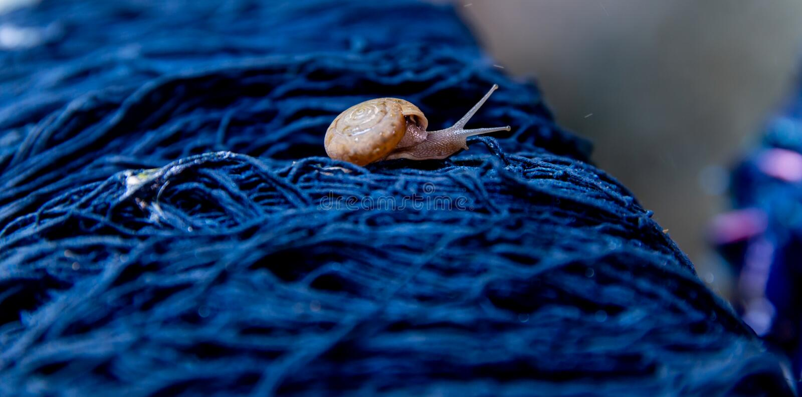 Snail on Cotton thread dyeing indigo natural color. little life in natural. Small snail on Cotton thread dyeing indigo natural color. little life in natural royalty free stock image