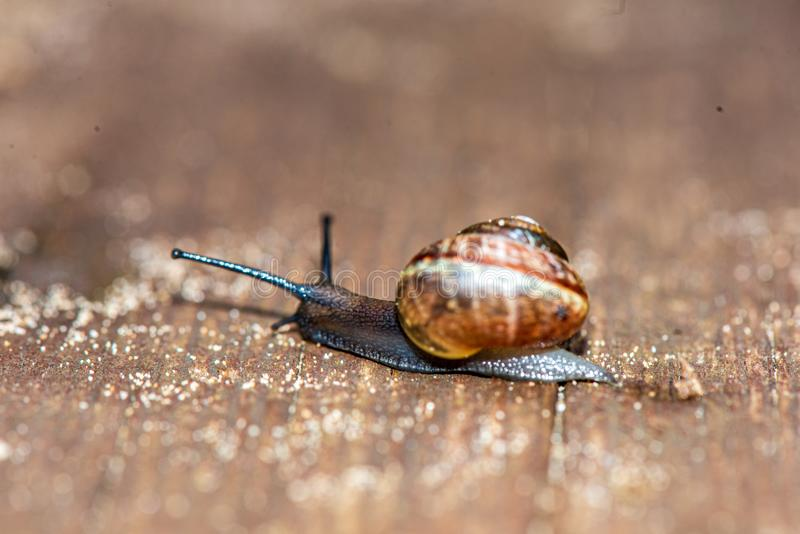 Small snail crossing the road. In summer stock images