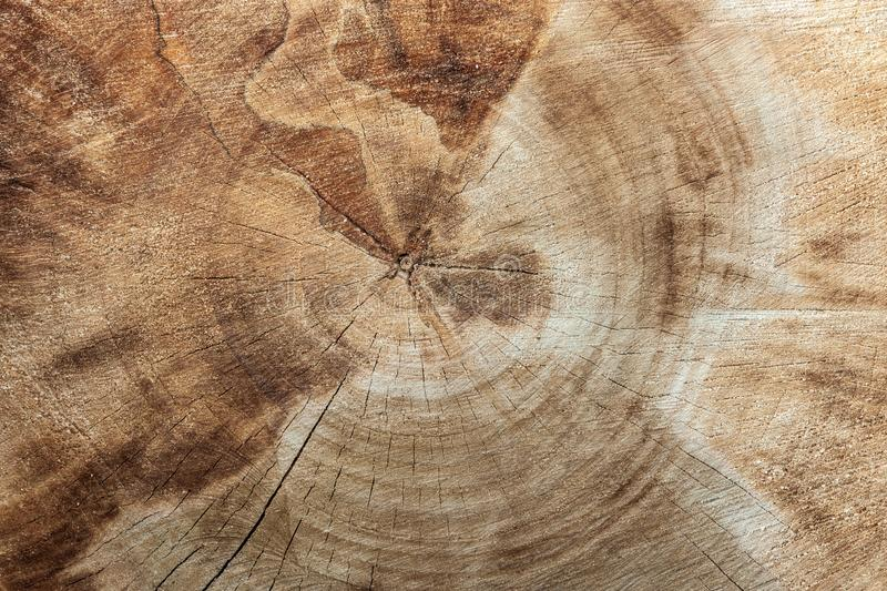 Old wooden background texture of poplar wood. stock photo