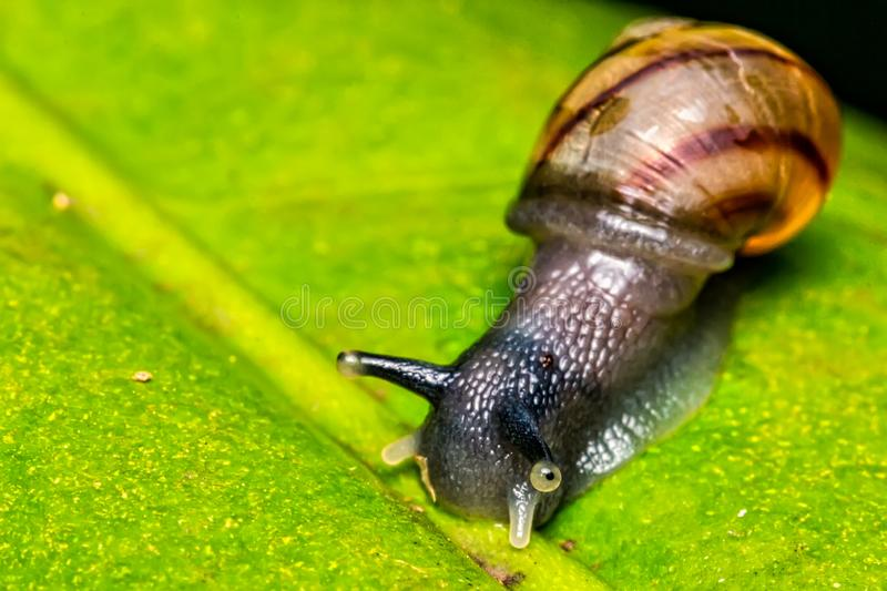 Small snail on leaf macro photo top view. Photo ofSmall snail on leaf macro photo top view royalty free stock photography
