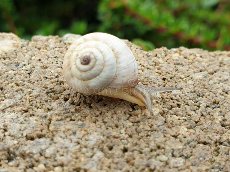 Small snail on rock fence royalty free stock photos